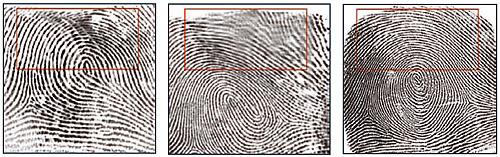 дактилоскопия. отпечатки пальцев